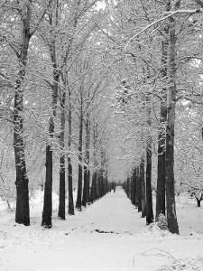 زيبايي هاي زمستان